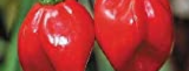 Red Savina Hot Pepper 10+ Seeds The Last World Record Holder For Hot