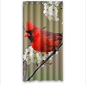 Amazon.com: classic red Cardinal bird design,funny birds