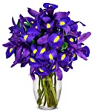 Flowers - Stunning Blue Iris - 10 Stems (FREE Vase Included)