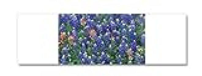 21 x 7 Wall Vinyl Sticker Texas Bluebonnets