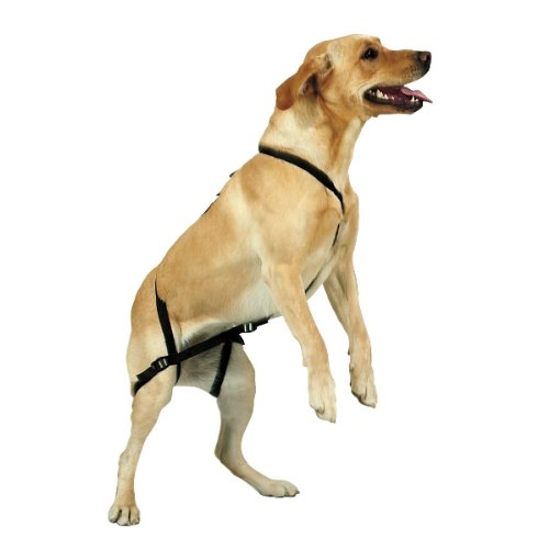 No-Jump Dog Harness