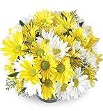 Daisy Flower Bowl, Premium