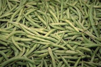 Green Beans Guide To Produce In Season At Farmers Market