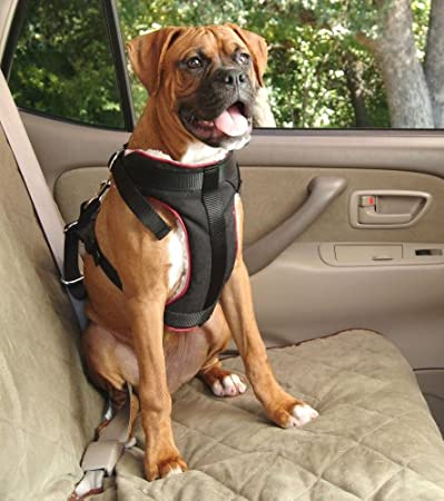 Dogs in Jeep without Top and Doors Jeep Wrangler Forum