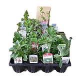 H&Aハーブショップ 熱帯地方・東南アジアのハーブ苗おまかせ12種セット