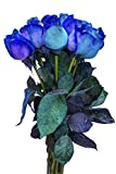12 Stems - Fresh Cut Blue Lollipop Roses from Flower Explosion