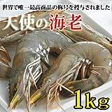 天使の海老 (1kg・30~40尾)