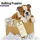Bulldog Puppies Mini Wall Calendar
