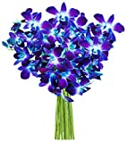 Blue Orchid Bouquet (10 Stems) - Without Vase