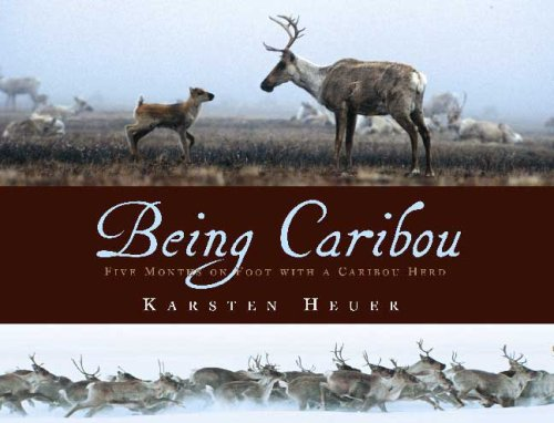Being Caribou book cover image