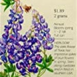 Texas Bluebonnet Heirloom Seeds 50 Seeds
