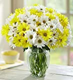 1-800-Flowers - Yellow & White Daisy Bouquet, 12-24 Stems - 24 Stems with...