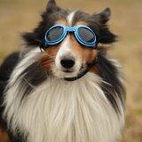 Buy Doggles UV Protection Dog Eyewear