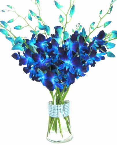 Just Orchids Blue Dendrobium Orchids With Vase W