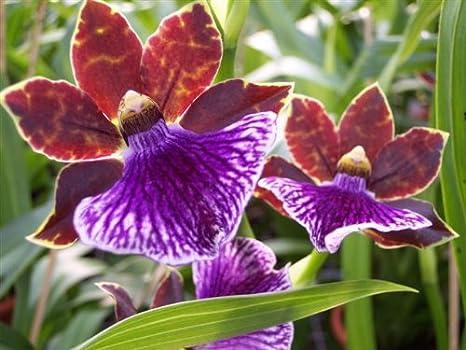 mini orchideen mein orchideen blog. Black Bedroom Furniture Sets. Home Design Ideas
