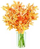 Sunset Serenade with Golden Mokara Orchids (10 Stems) - With Vase