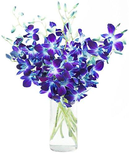 Fresh Cut Flowers Dendrobium Blue Orchids Bom Sonia Free