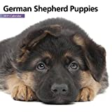 Magnet & Steel 6635 2015 Wall Calendar, German Shepherd Puppies, Mini