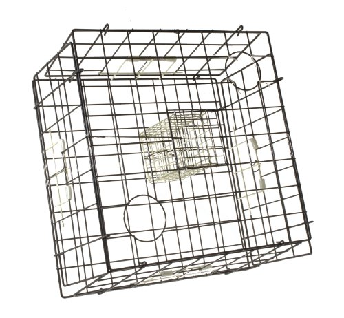 Danielson Fold-Up Square Glow Crab Trap (24-Inch)