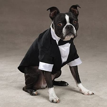 Doggy Tux