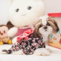 Dogloveit Japanese Kimono Style Costume Dog Clothes For ...