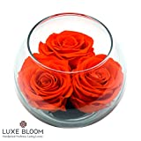 "Luxe Bloom Tangerine Preserved Roses | Lasts 60 days | Gorgeous Spring Flowers | 3 Tangerine (orange) roses & greens in a 4"" glass bubble 