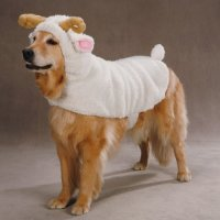 Zack & Zoey Polyester Lil Sheep Halloween Dog Costume, X ...