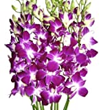 Fresh Cut Flowers -Dendrobium Orchids Bom Sonia