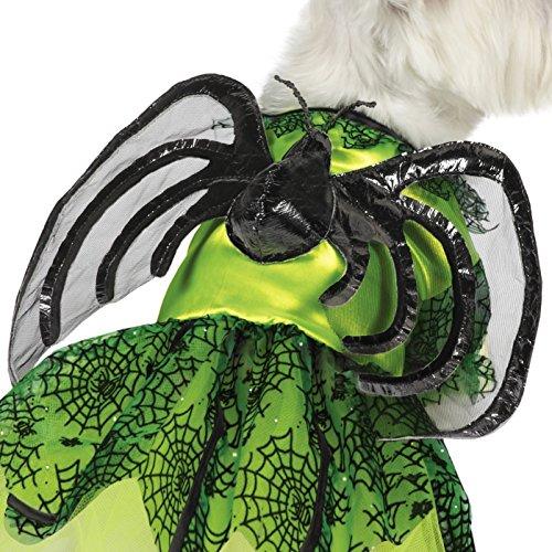 dog spider halloween costume