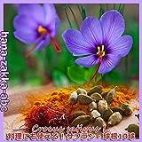 ◆お料理でも使える・サフラン・10球【花・球根】【人気の秋咲き球根】