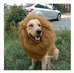 Lion's Mane Dog Costume: Amazon.co.uk: Pet Supplies