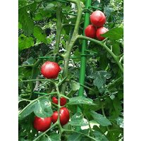 MultiStake Set - Tomato Stake - Vine Plants - Vegetable ...