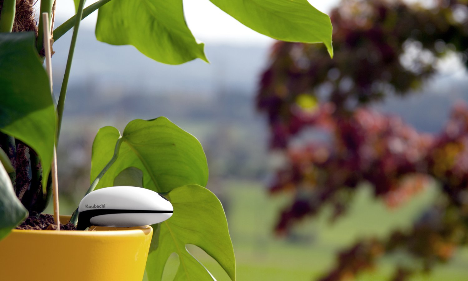 Diy our world will be all dc power - Monitor your indoor plants with the koubashi wi fi sensor ...