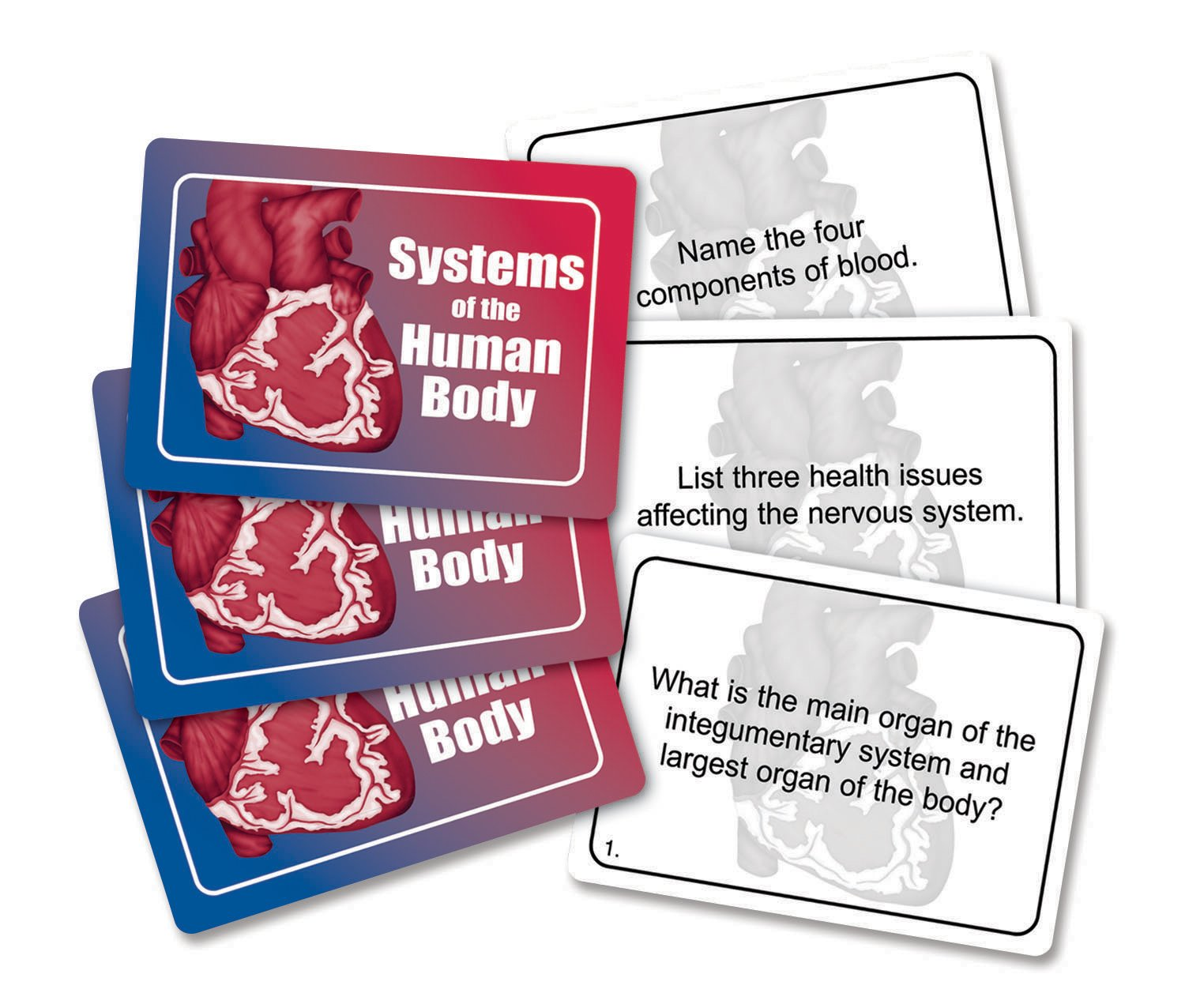 J Amp B Products Systems Of The Human Body Game