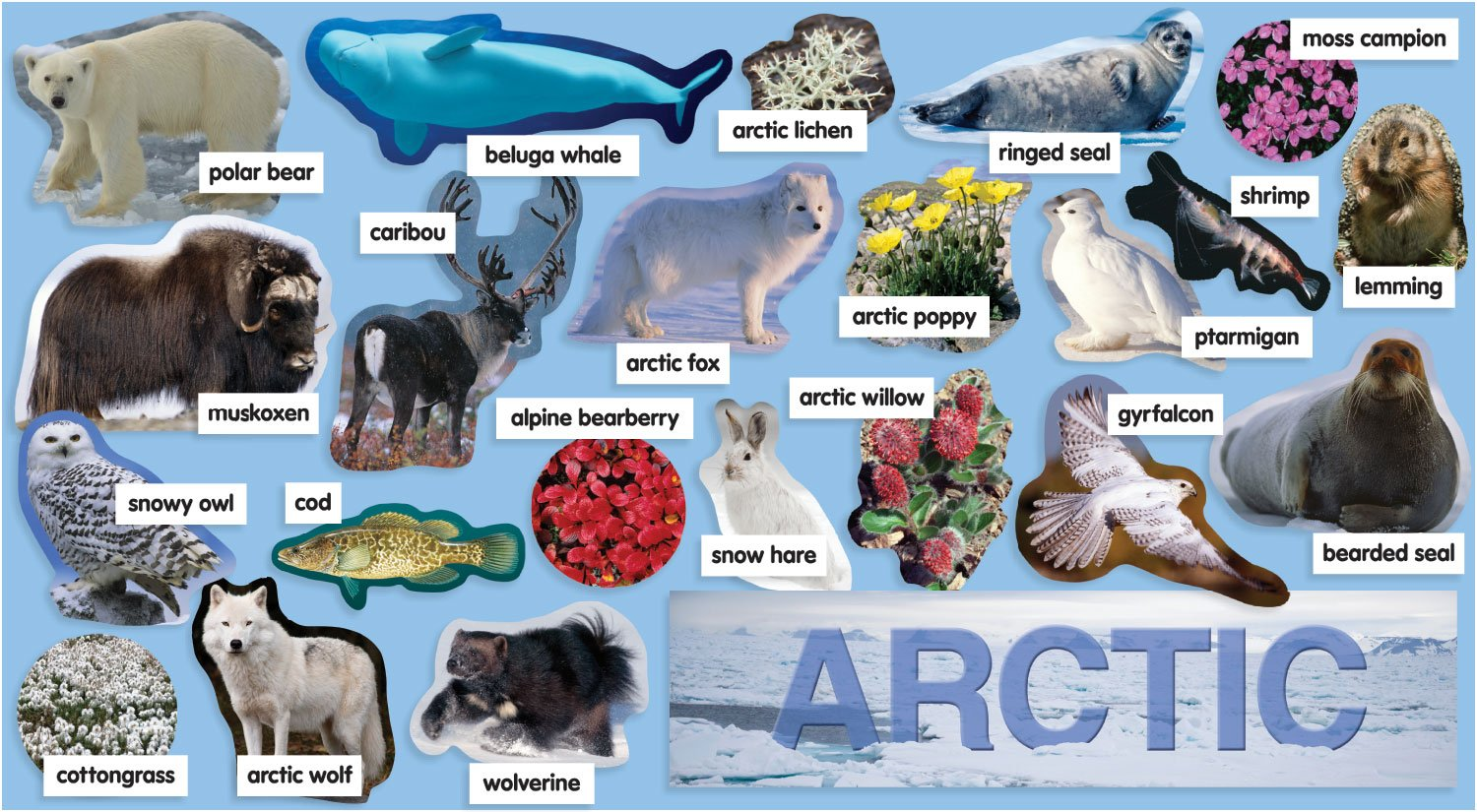 Arctic Ocean Animals Lists Pictures To Pin