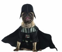Halloween Costumes For Toy Breed Dogs