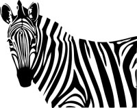 Zebra Wall Decals - TKTB