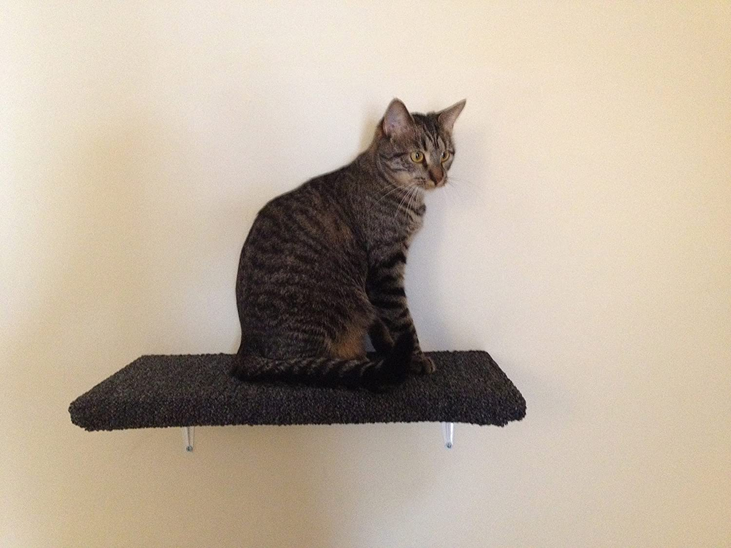 Wall Shelves For Cats To Climb On