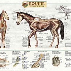 Horse Skull Diagram Telephone Plug Wiring Australia Animal Anatomy On Pinterest And