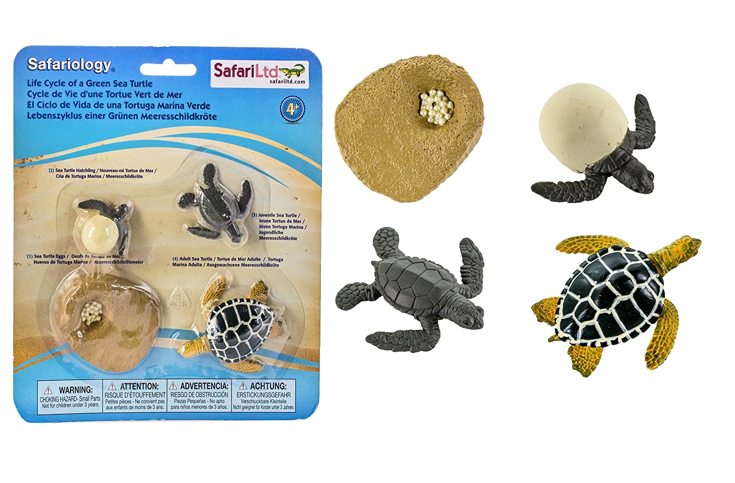 sea turtle life cycle diagram partsam led lights wiring plant and animal lifecycles free printables crafts