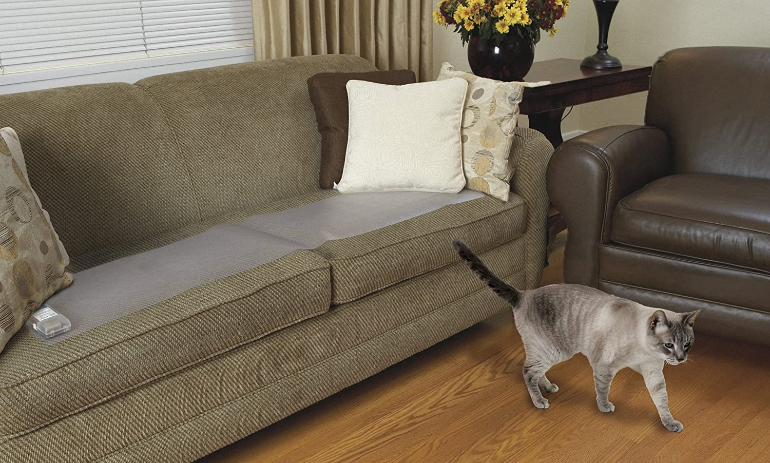 sam and cat sofa bed trick furniture toronto how to keep cats off gradschoolfairs