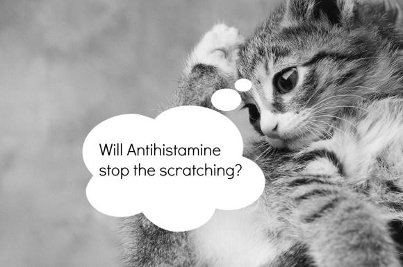 Will Antihistamine Work for Eczema?