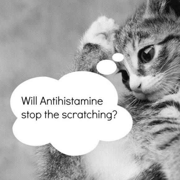 Antihistamines and Itch for Eczema Relief studies on efficacy