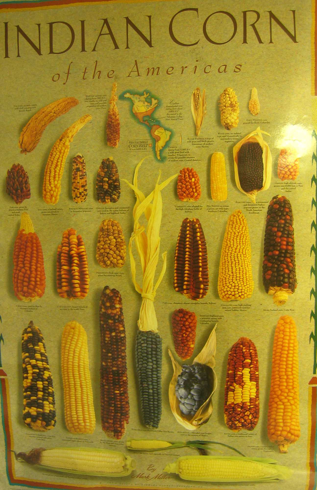 Indian Corn Americas Poster