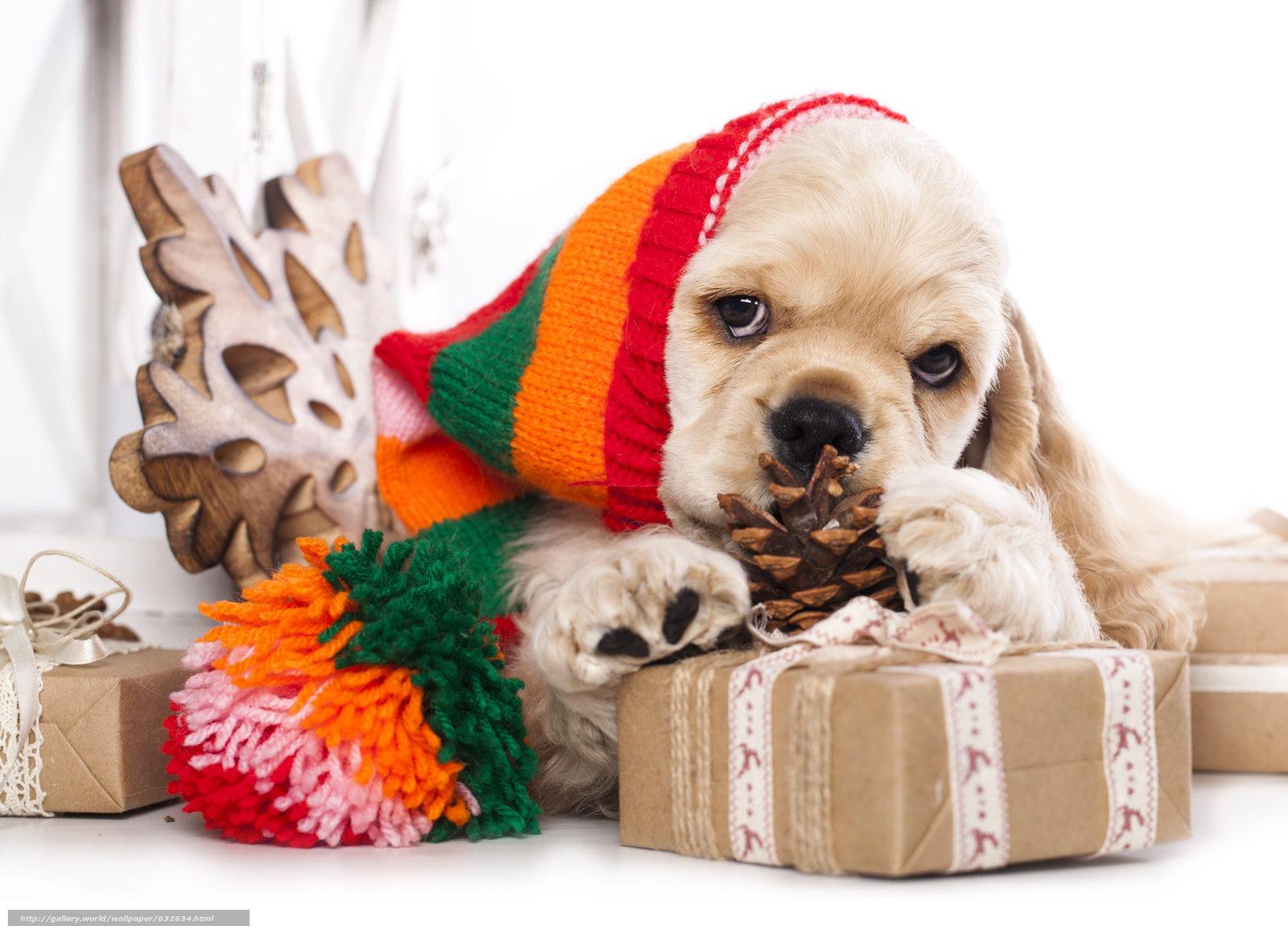 Pink Wallpaper With Cute Puppy Golden Retriever Бесплатные новогодние обои 2018 собаки собачки и щенки