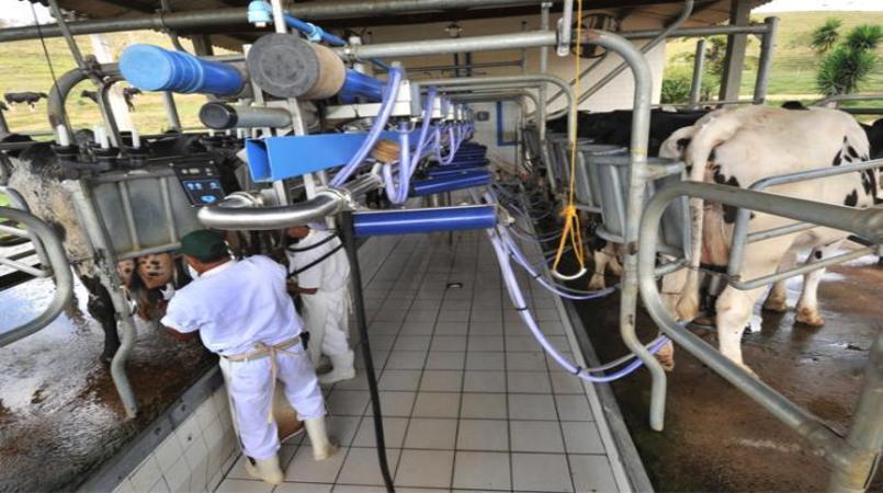 Governo Bolsonaro vai apoiar fortalecimento do setor de leite