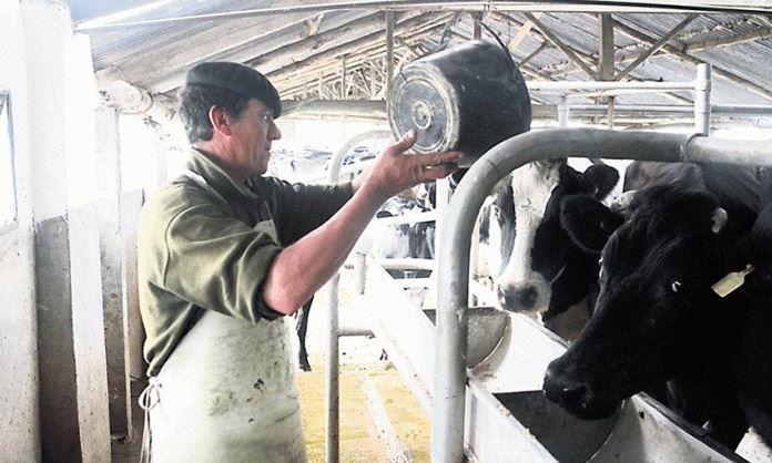 Instrução normativa 77: como adequá-la nas propriedades leiteiras?