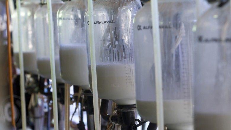 São retomadas as importações brasileiras de lácteos