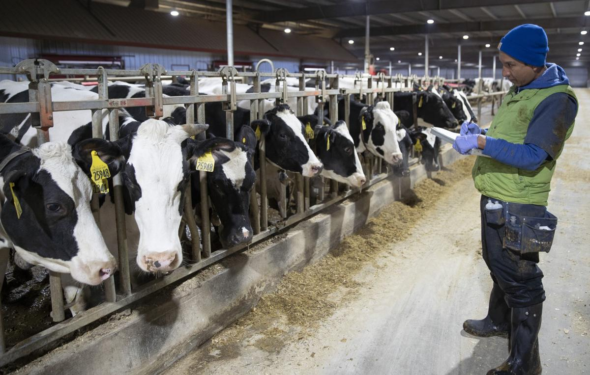 Indiana Dairy Farms Decreased By 10 Percent In 2018, But That Could Be A Good Thing