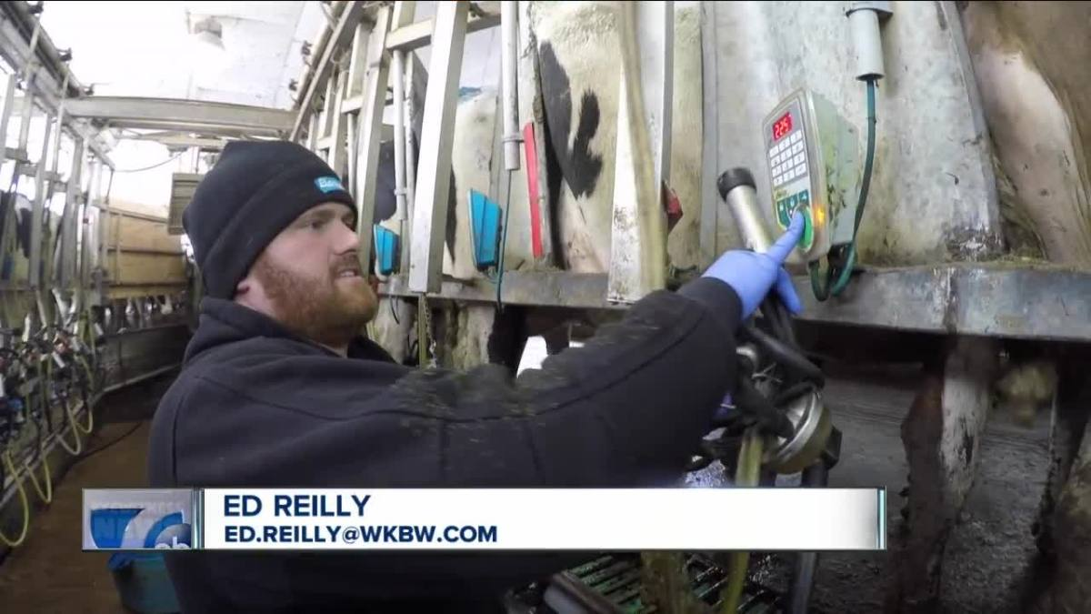 WNY dairy farmers are still in crisis: ask Congress for help